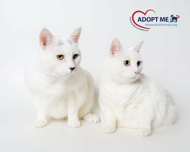 awla-cats.jpg