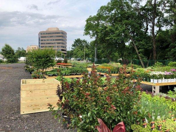 Greenstreet Garden Belle Haven