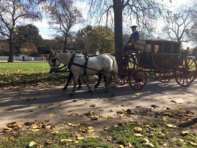 1d-williamsburg-horses.JPG