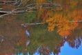 huntley-meadow-b.jpg