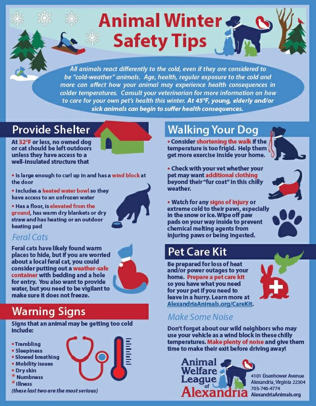 Image result for PET SAFETY SHEET FOR WINTER
