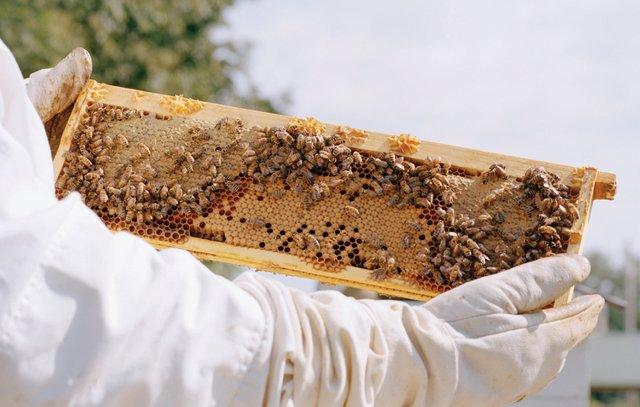 backyard-beekeeping.png