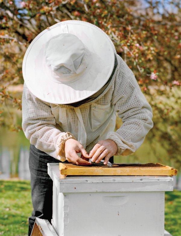 beekeeper.png