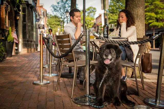 Outdoor_dining_with_dog_Bunny_CREDIT_K_Summerer_for_Visit_Alexandria-720x480-328d50ad-b6e7-4f8f-950f-88bf60c6216f.jpg