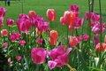 Historic Garden Week of Virginia