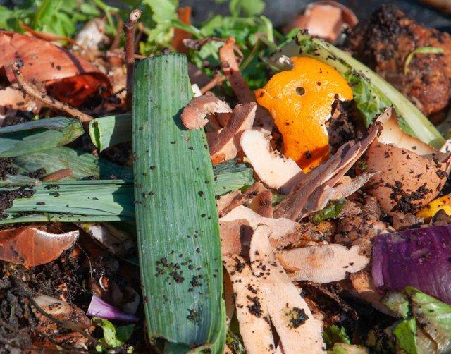 Compost Step 2 - Food Scraps and Waste.jpg
