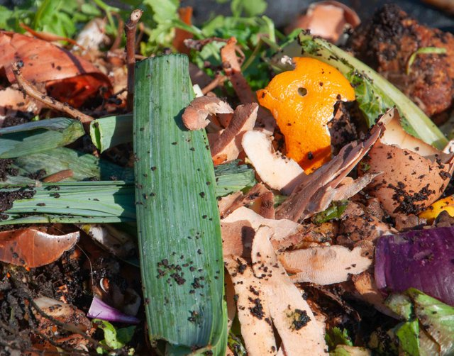 Compost Step 2 - Food Scraps and Waste.jpg