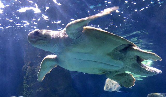 33-vabeach-aquarium.jpg