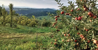 hollin-farms-northern-virginia-apple-picking.png