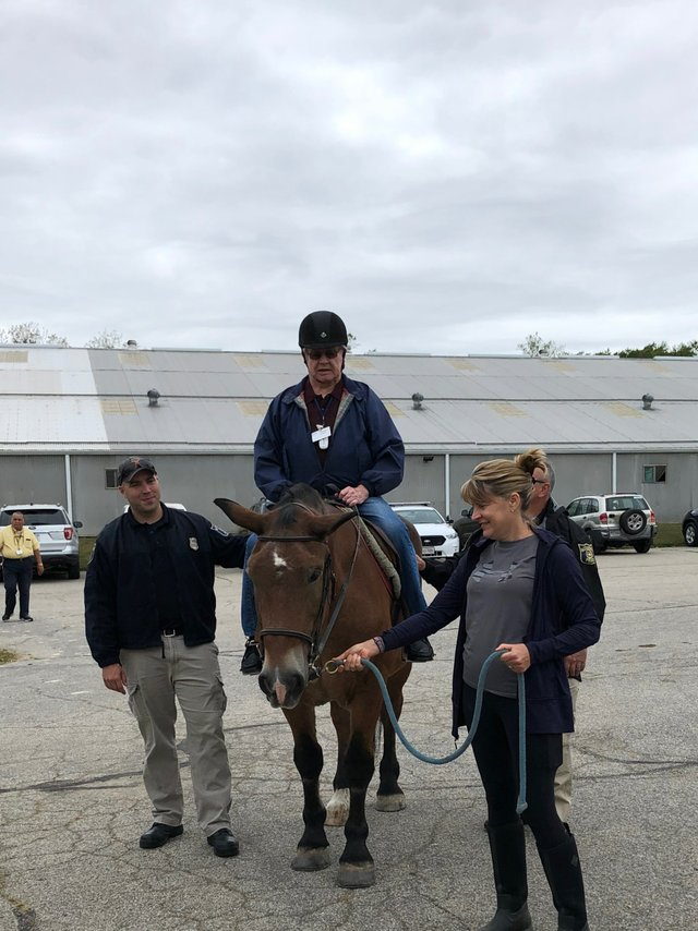 APD-Horses-Therapy-courtesy-of-simple-changes.JPG