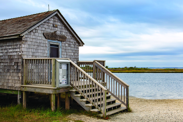 assateague-island-md-1.jpg