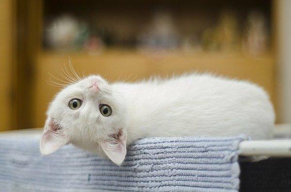 kitten-1285341_640.jpg