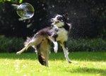 dog-bubbles