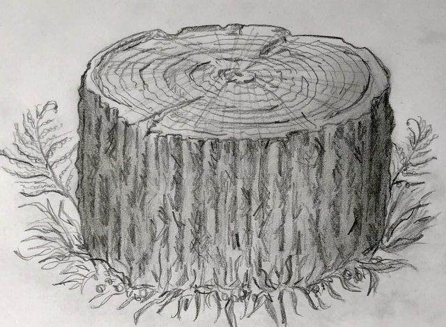 Drawing by Lucinda Jennings
