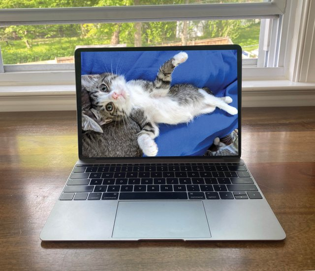 Virtual Na-Meow-Ste 1.jpg