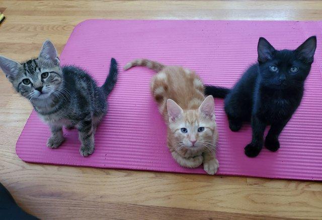 kitten yoga.jpg