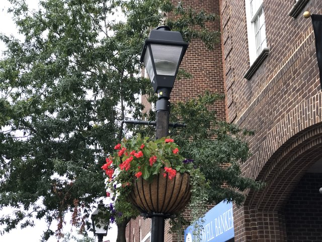 king-street-light-post-flowers2.JPG