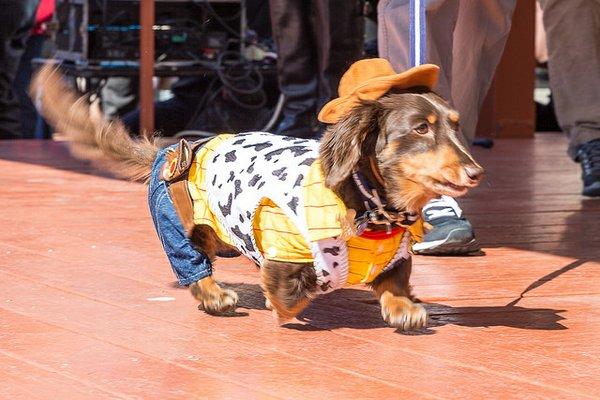 ballyshaners-dog-show.jpg