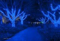 Meadowlark Gardens Winter Walk of Lights