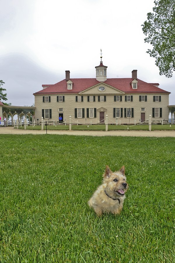 Bring your dog to Mount Vernon this spring.