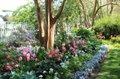 VA Garden Week.jpg