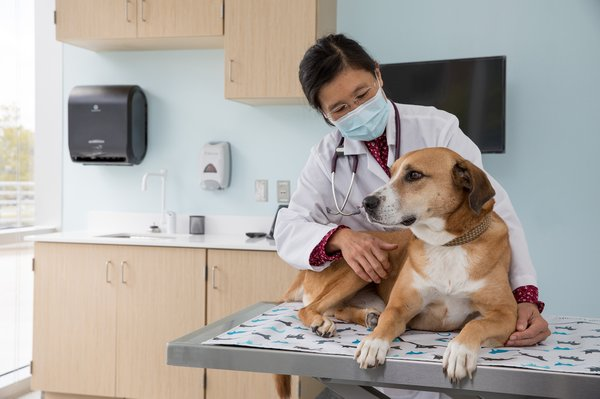 animal-cancer-care-and-research-center_tuohy-exam.jpg