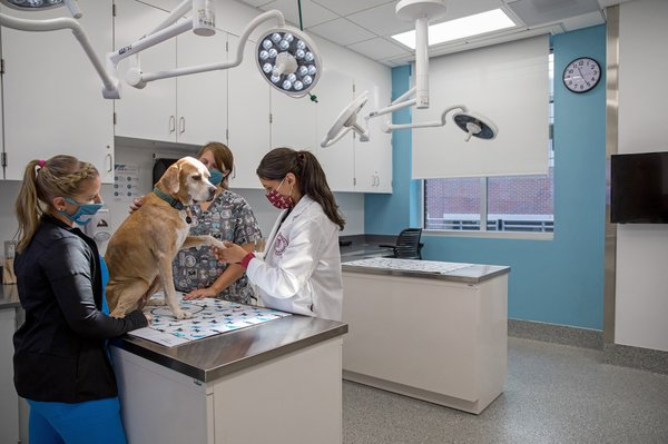 animal-cancer-care-and-research-center_treatment-room.jpg