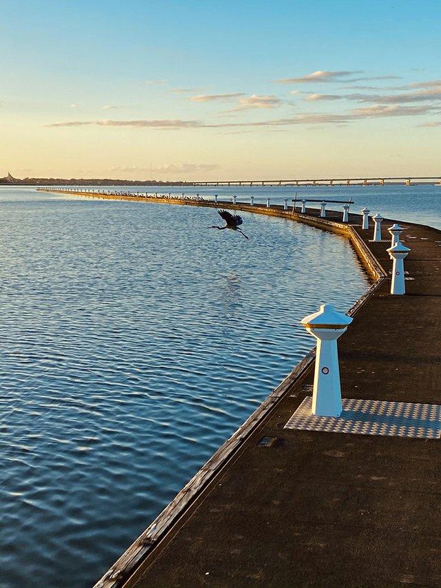 Blue Heron - Hyatt Regency Chesapeake Bay (1).jpg