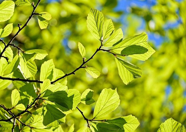 oak-3064187_640-pixabay.jpeg