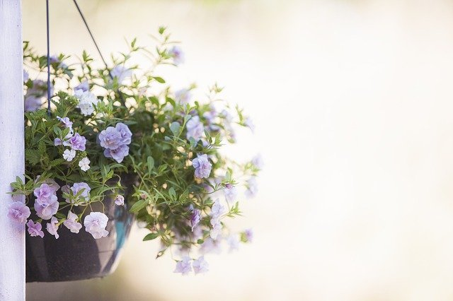 plant-nutrients-3295486_640-pixabay.jpeg