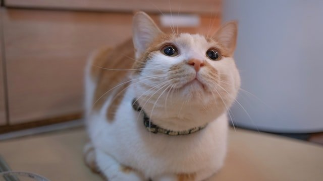 yongzheng-cat-unsplash.jpeg