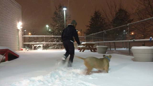 Demetrius Jackson gives a dog from a South Korean meat farm his first chance to play in the snow.jpg