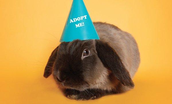 awla-adopt-bunny.png