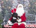 Santa-Paws-icon-580x460.jpg