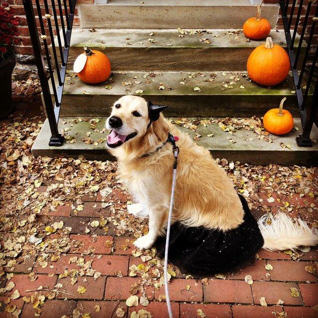 Rosie Halloween.jpeg
