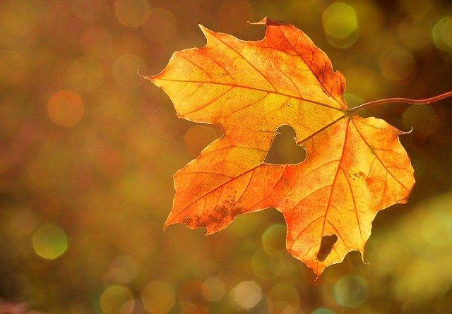 fall-foliage-pixabay.jpeg